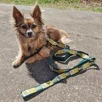 MSSU Pet Leash